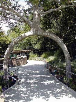 Деревья-скульптуры